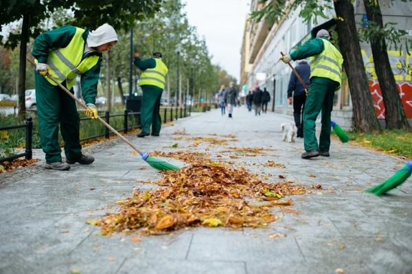 Pracownicy firmy porządkowej zamiatają chodnik z jesiennych liści
